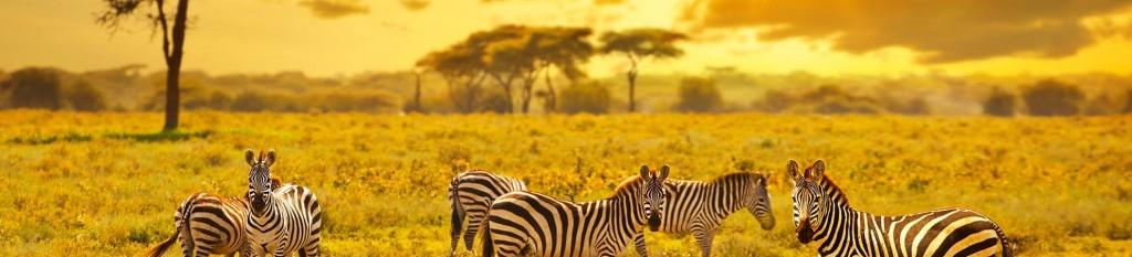 Voyage Tanzanie, séjour Kenya