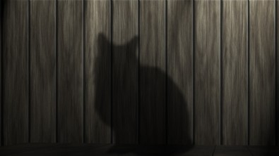 chat et assurance chat