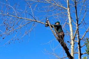 L'élagage des arbres à proximité des lignes électriques