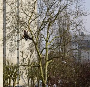 Faut-il attendre l'hiver pour élaguer ses arbres?