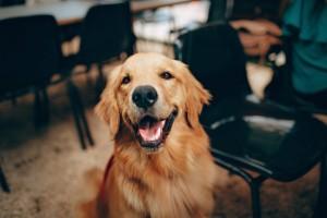 alimentation pour chien sans céréales
