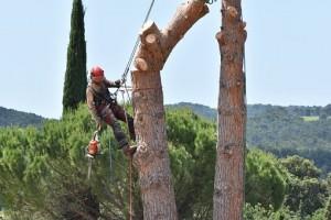 Travaux d'élagage d'arbres : quelles sont les mesures de sécurité à prendre pour éviter les accidents ?