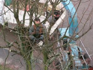 Quelle est la meilleure période pour réaliser les travaux d'élagage d'arbre?