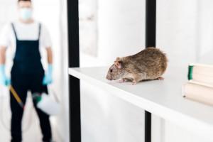 Que faire pour se débarrasser des souris