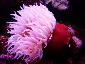 Méduses, anémones, coraux : tout sur ces créatures marines