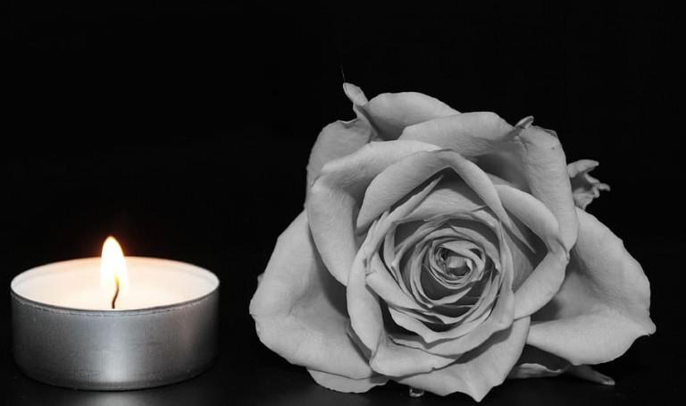 rose-blossom-bloom-rose-bloom (1)